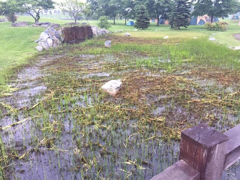 しのつ湖公園キャンプ場にある池、沼?カエルの大合唱が聞こえる。