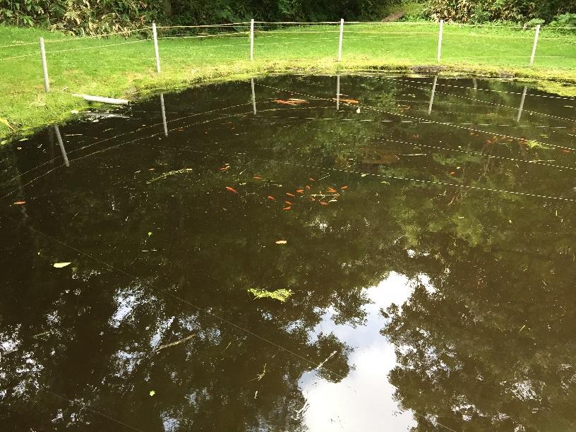 池には鯉か金魚らしきものがいた。