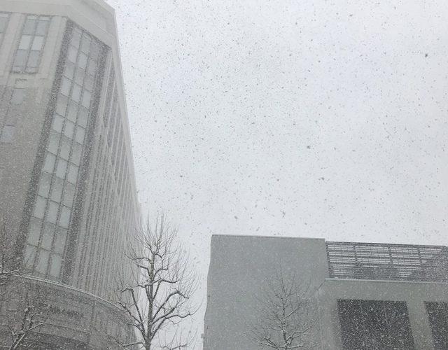 一面の銀世界。雪が降ってきた。