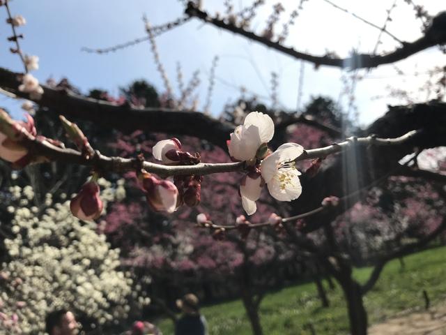 桜も咲いて綺麗だった
