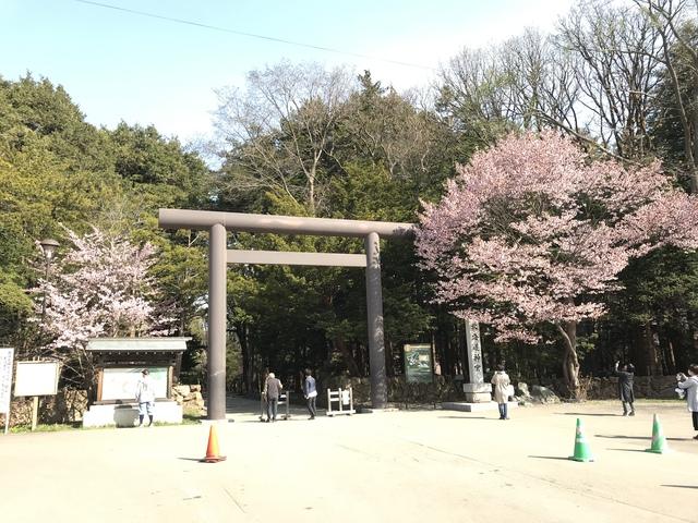 円山神社の桜も咲いていた