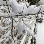 雪がきたー