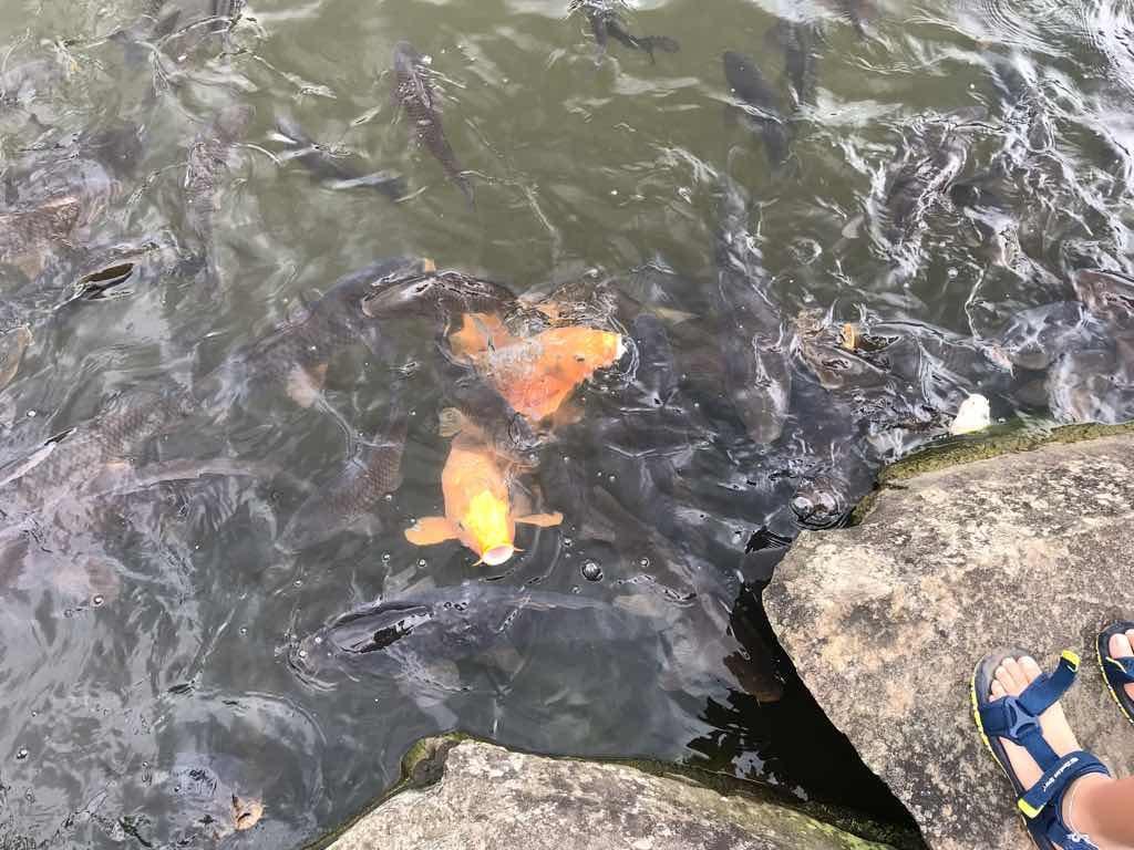 池もあって鯉や亀が気持ちよさそうに泳いでいた。