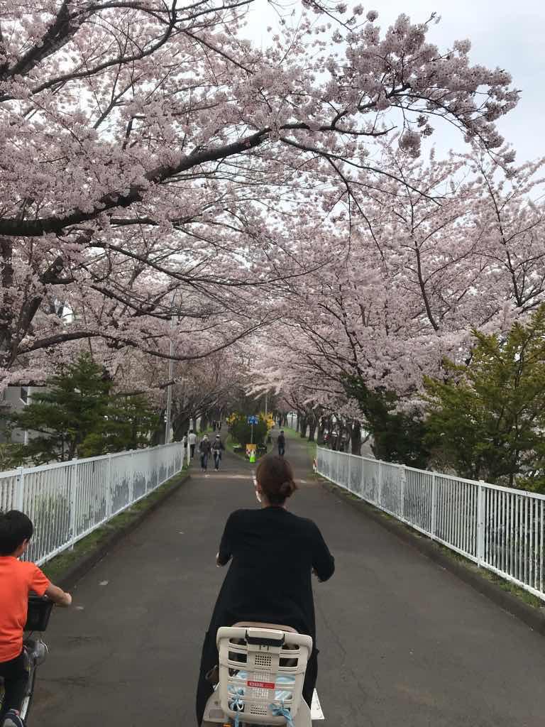 サイクリングロード名物、桜のトンネル。本当に綺麗だ。