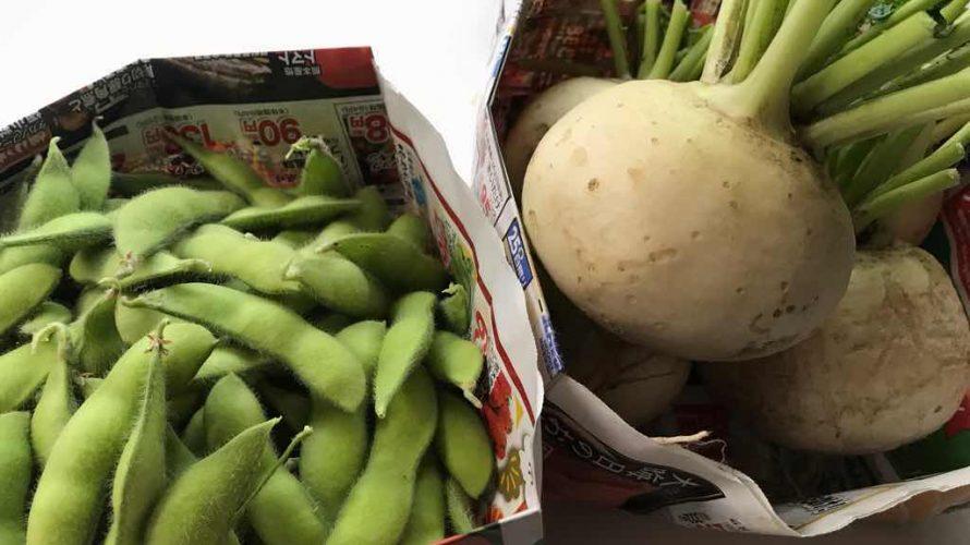 枝豆と蕪。今年はこいつらがいい出来だった。
